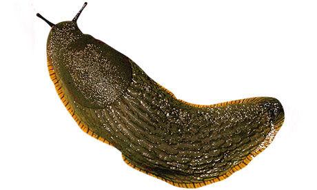 Click for popup of 69-slug.jpg